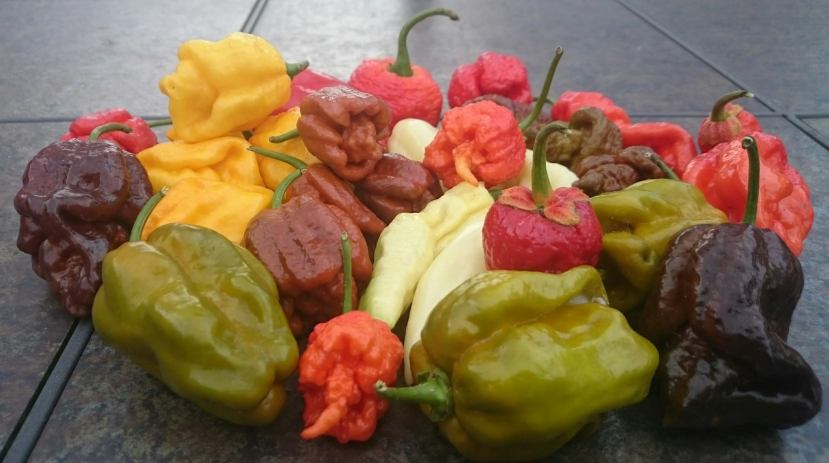 ghostpeppers