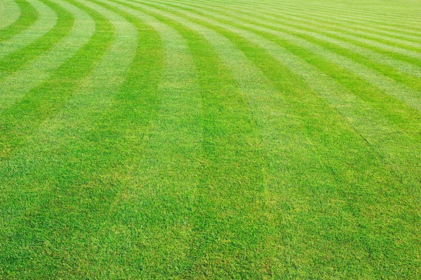 41326830 - mowed lawn background